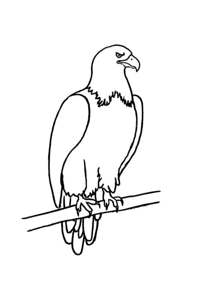 How To Draw A Bald Eagle Step By Step Easy Animals 2 Draw