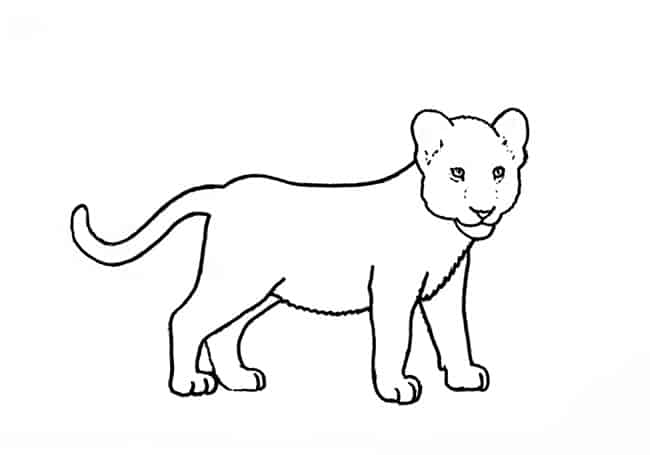 How To Draw A Lion Cub Step By Step Easy Animals 2 Draw