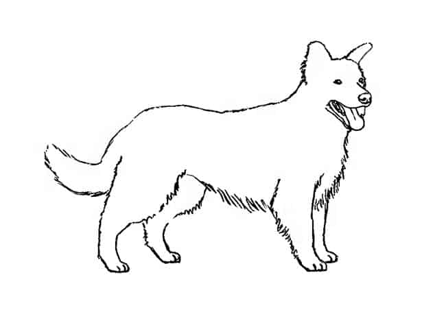 How To Draw Dogs Step By Step Easy Animals 2 Draw