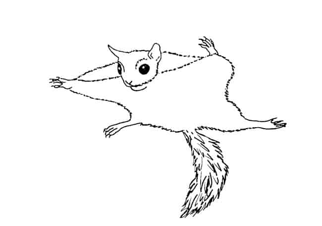 How To Draw A Flying Squirrel Step By Step Easy Animals 2 Draw