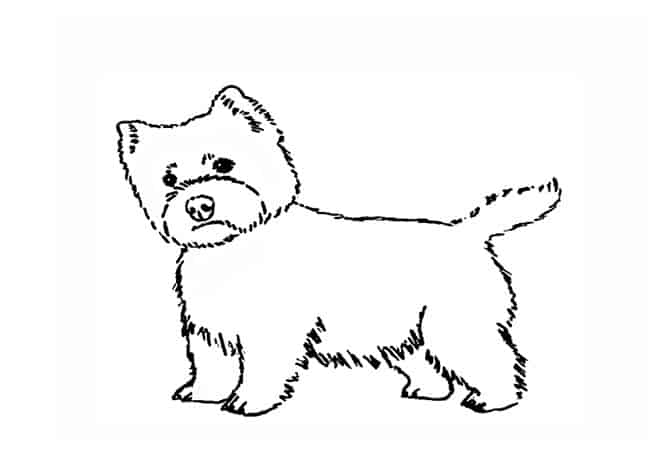 How To Draw A Westie Step By Step Easy Animals 2 Draw