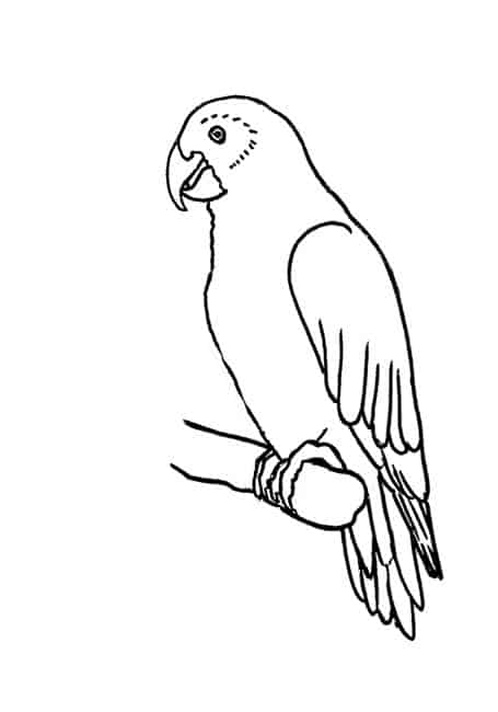 how to draw a Parrot - Easy Animals 2 Draw