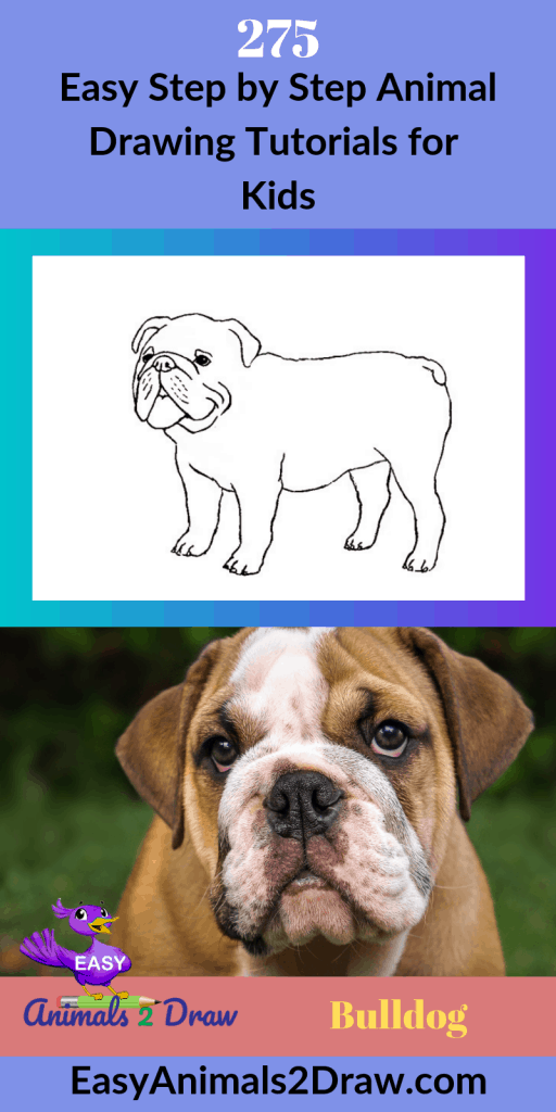 Pinterest image How to draw a Bulldog