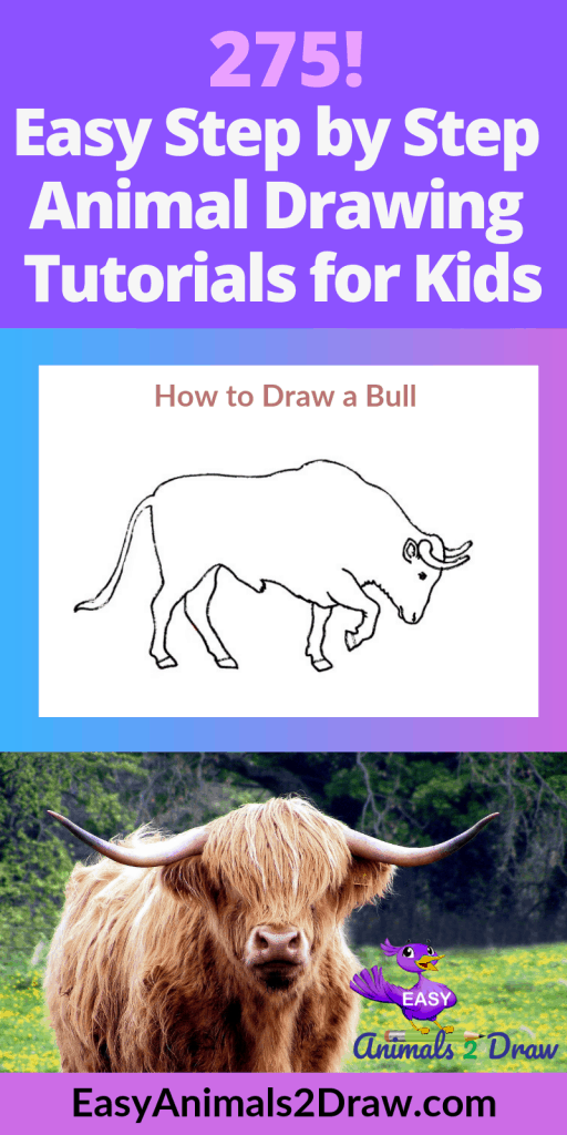 Pinterest Image How to draw a Bull