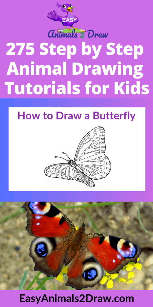 Pinterest image how to draw a butterfly