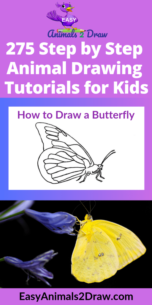 Pinterest image how to draw a butterfly side view
