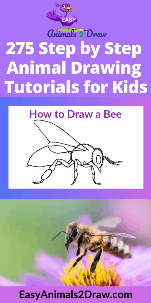 pinterest how to draw a bee