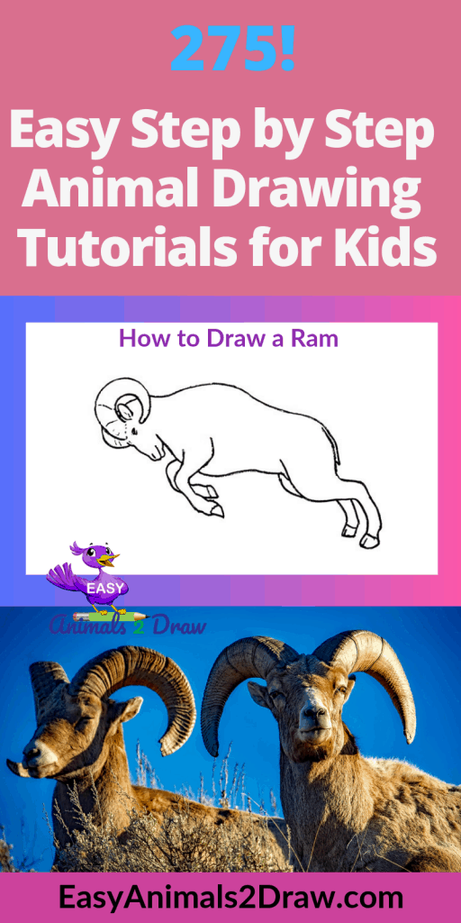 Pinterest Image How to Draw a Ram