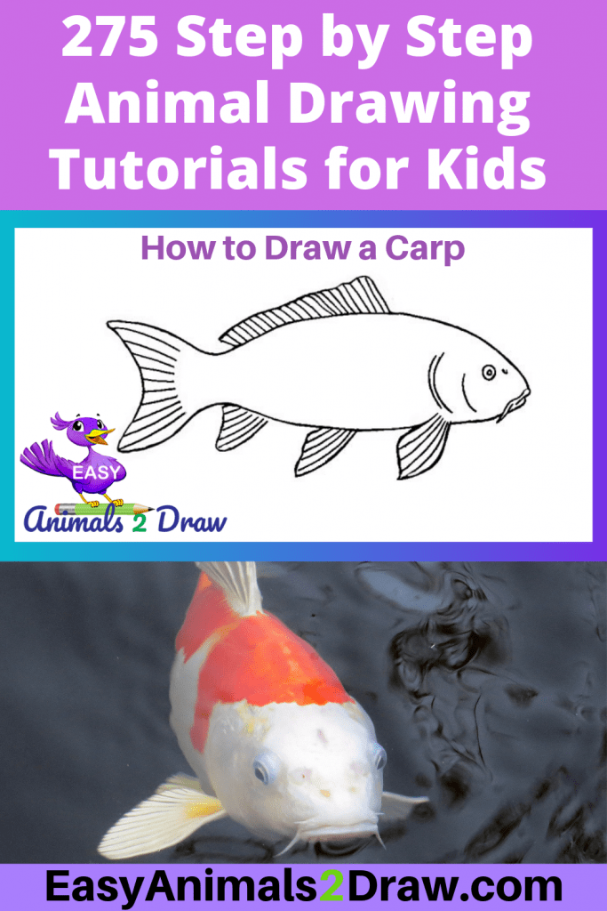 Pinterest image How to draw a Carp