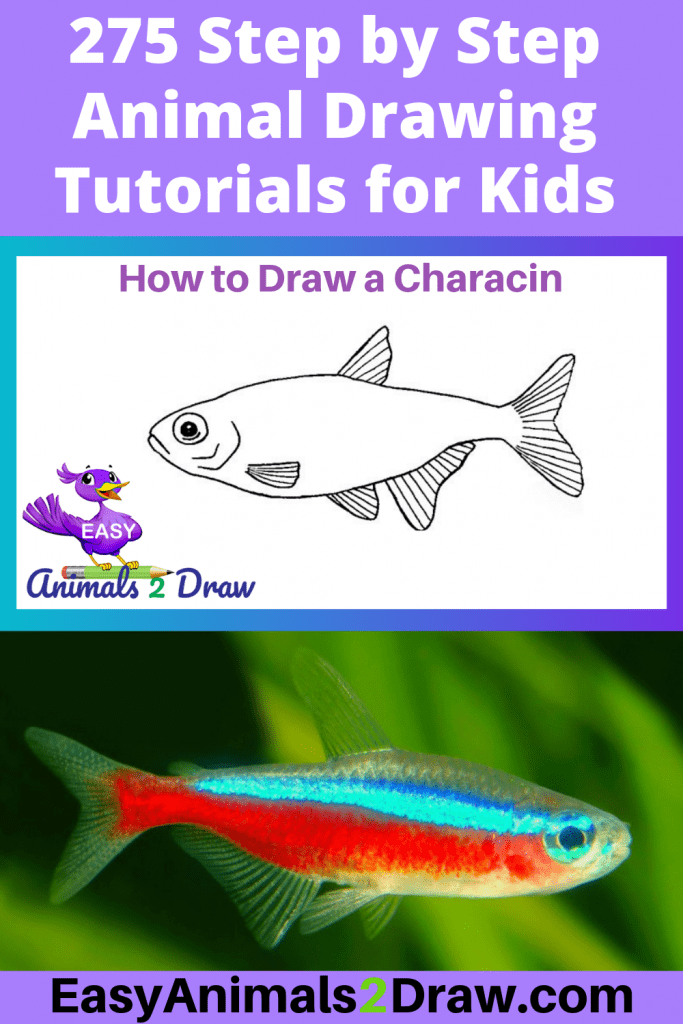 Pinterest Image How to Draw a Characin
