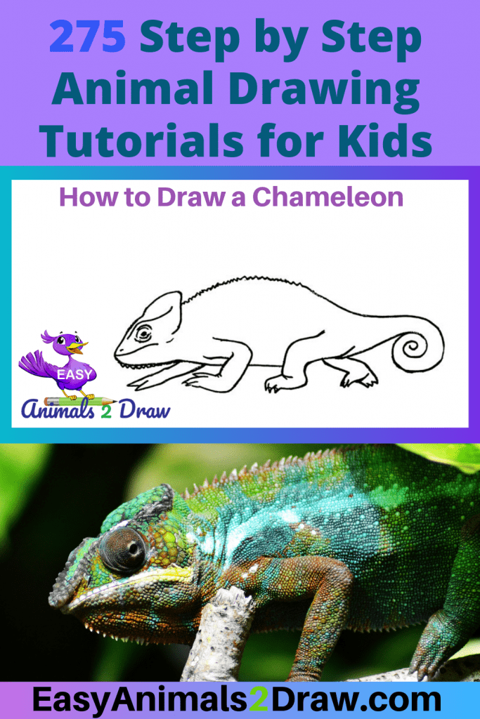 Pinterest Image How to draw a chameleon