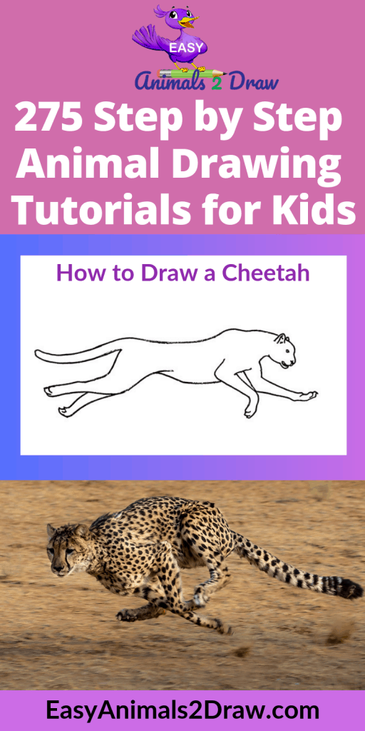 Pinterest image How to Draw a Cheetah running
