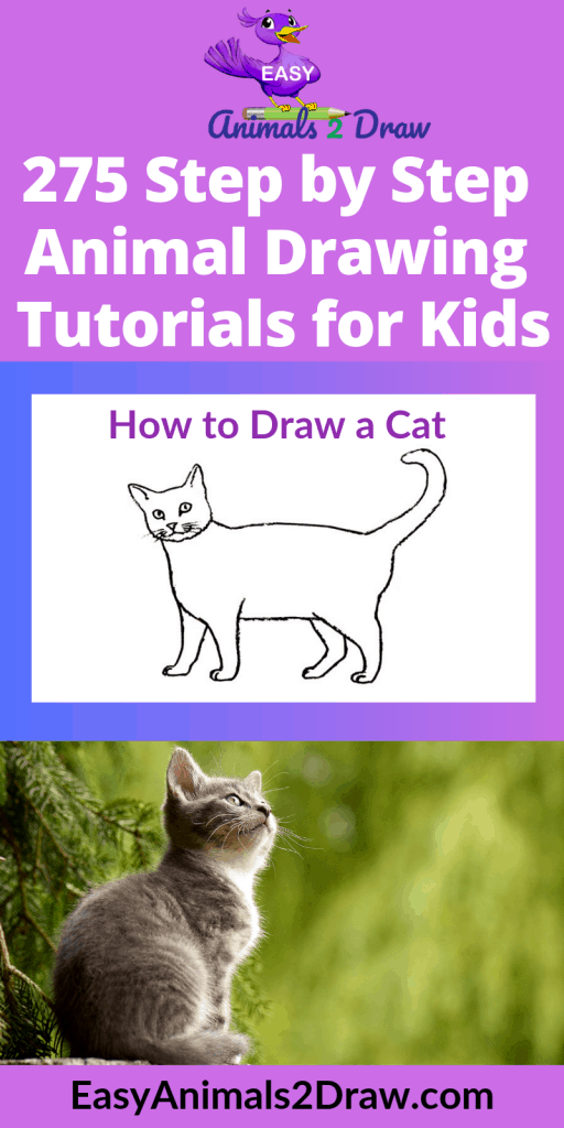 Pinterest image How to Draw a Cat