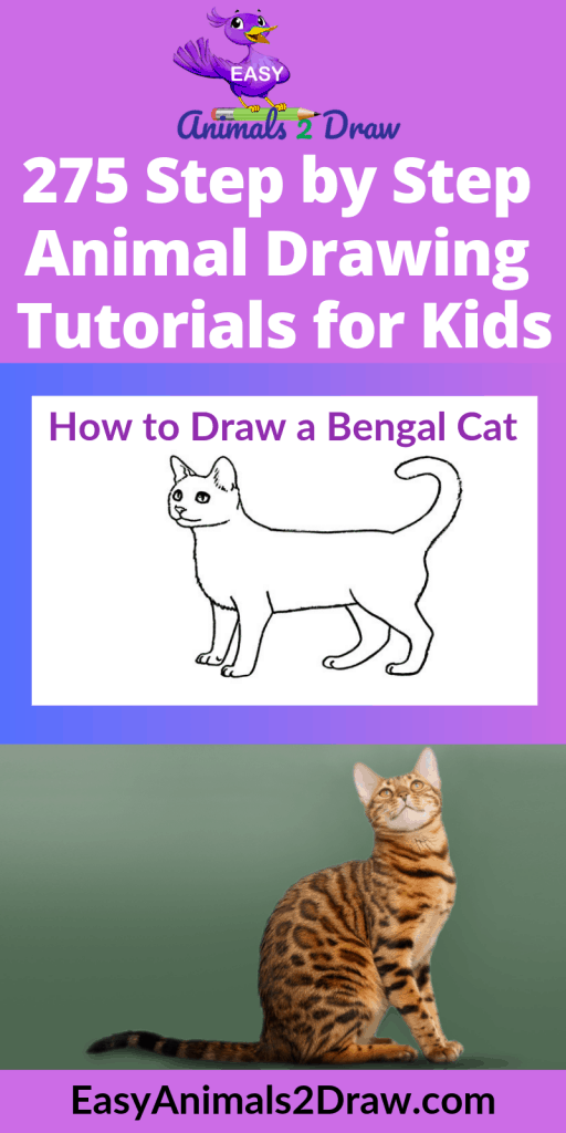 pinterest image how to draw a bengal cat