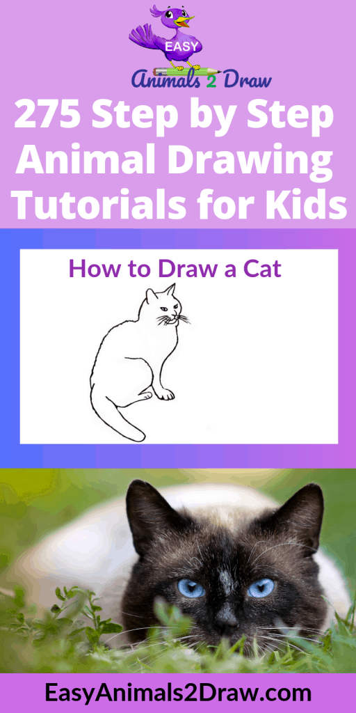 Pinterest images How to draw a cat sitting