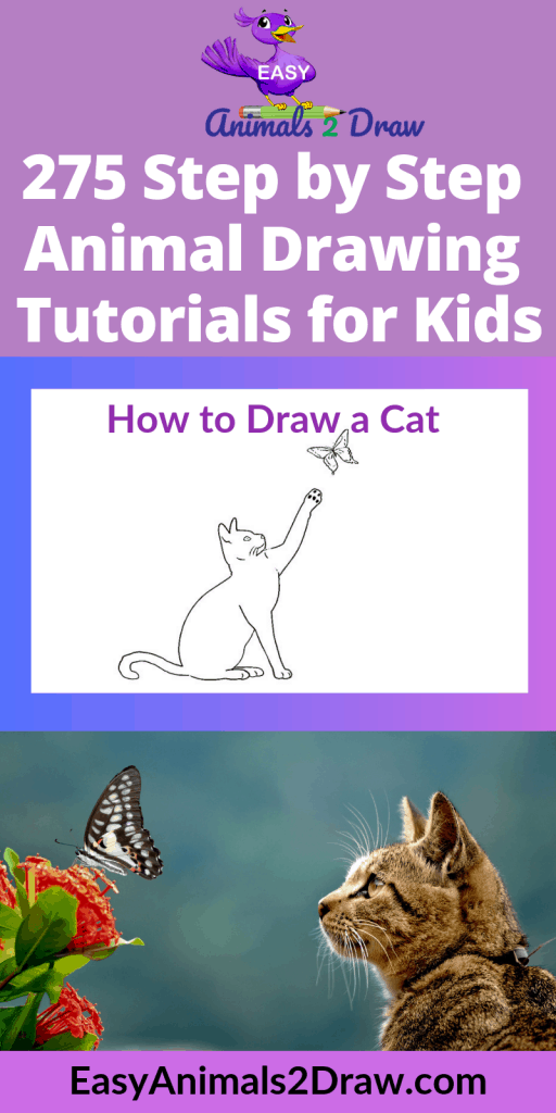 Pinterest image How to draw a Cat and Butterfly