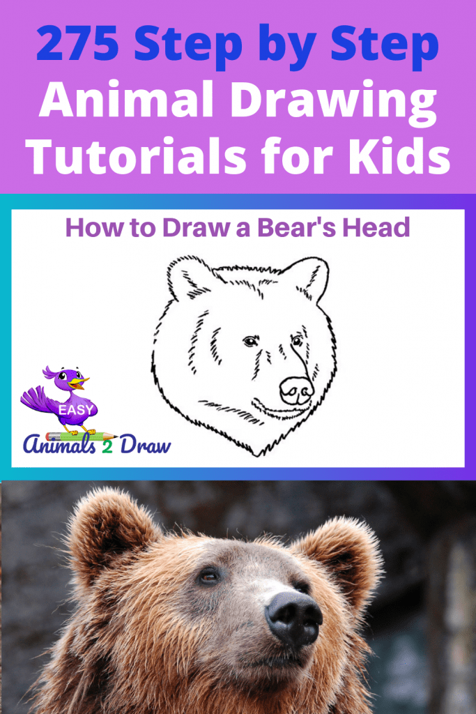 Pinterest how to draw a bears head