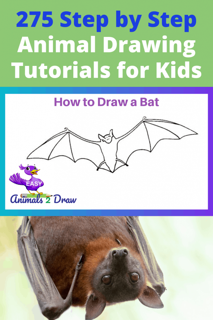 Pinterest image how to draw a bat