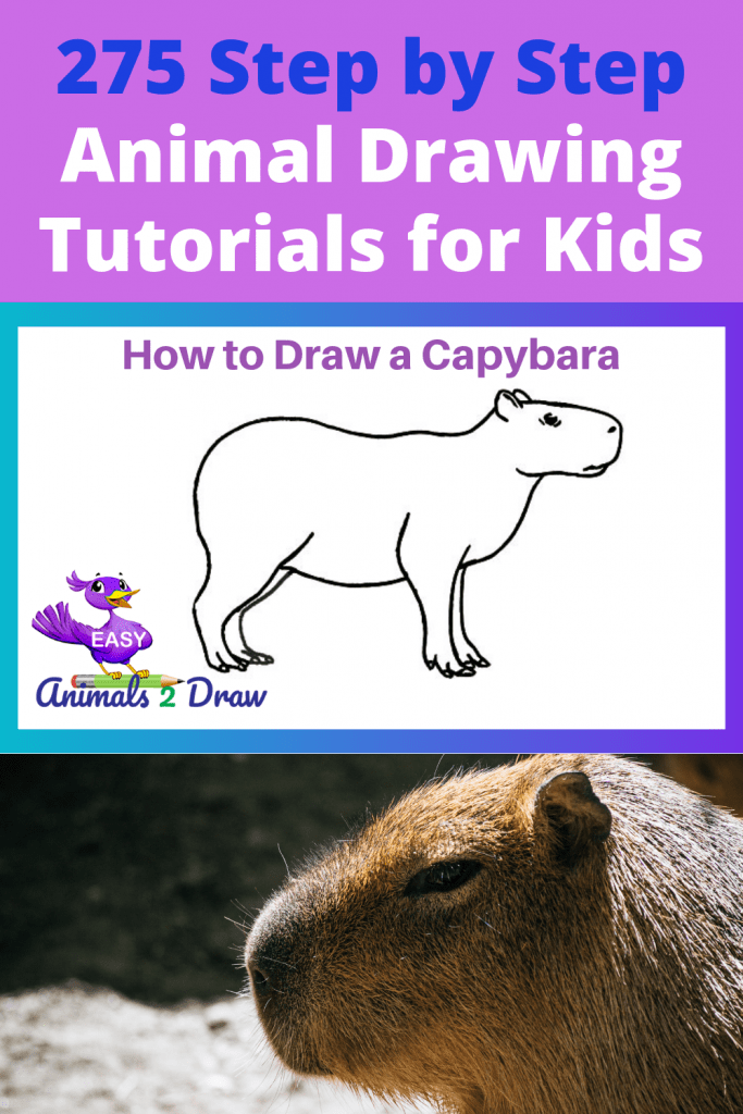 Pinterest image How to draw a capybara