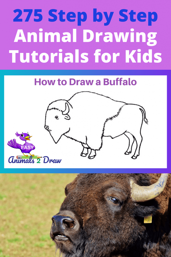 Pinterest image How to draw a buffalo
