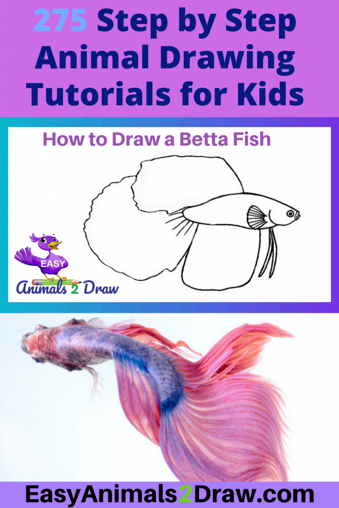 Pinterest image how to draw a betta fish