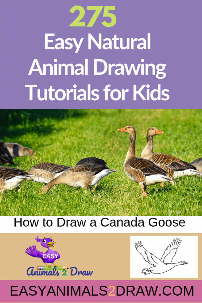 Pinterest Image How to draw a Canada Goose step by step