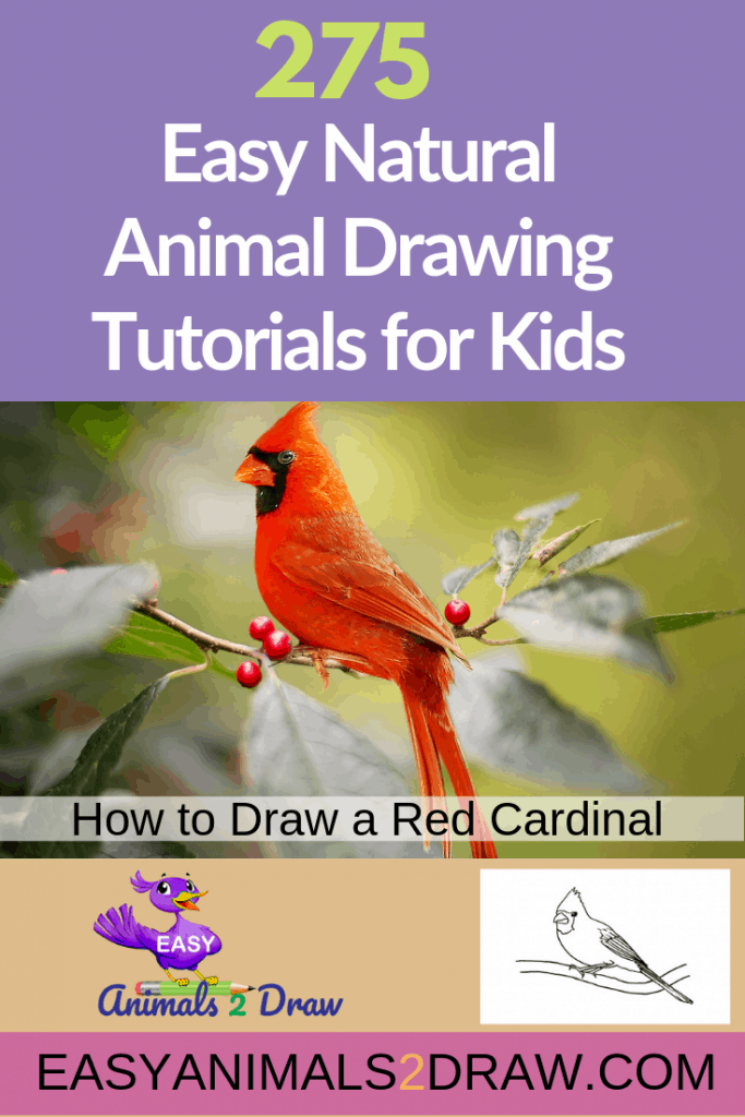 Pinterest image how to draw a red cardinal bird