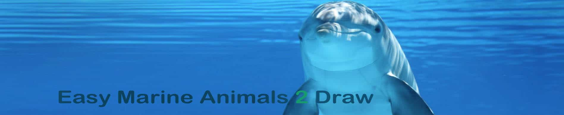 HOW TO DRAW MARINE ANIMALS