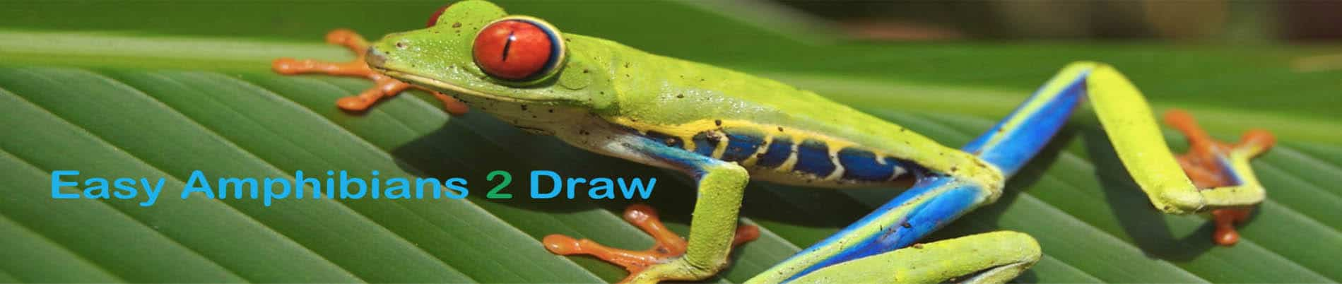 How to Draw An Amphibian