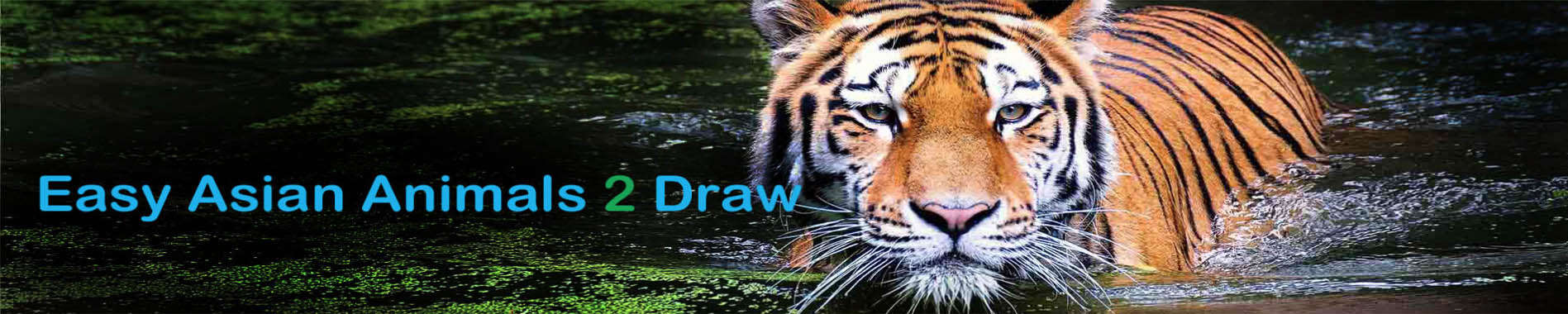 How to Draw an Asia Tiger