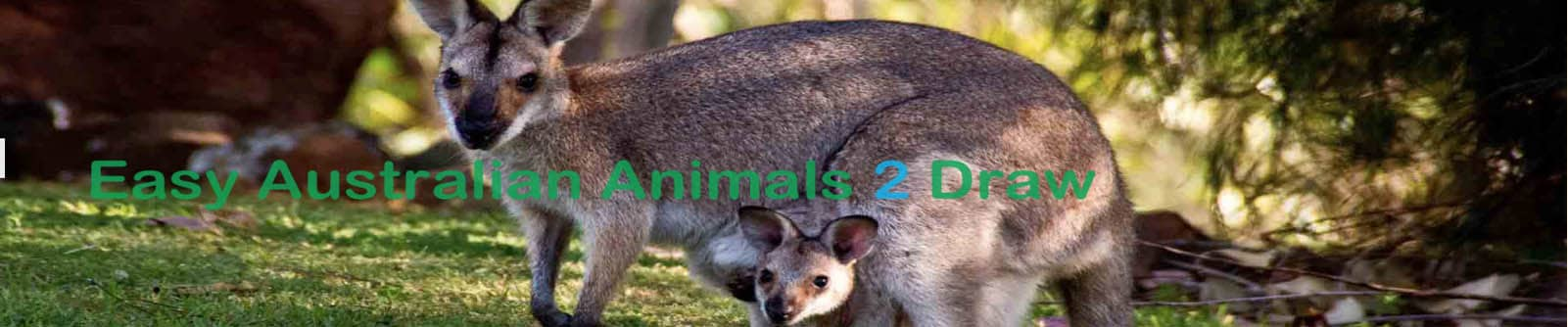 How to draw Australian animals