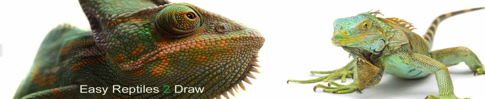 How to draw a Reptile