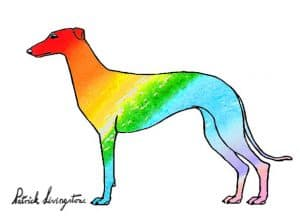 Greyhound watercolor drawing rainbow by Patrick Livingstone