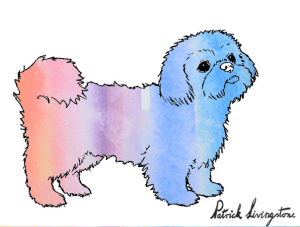 Shih Tsu dog drawing in color 2