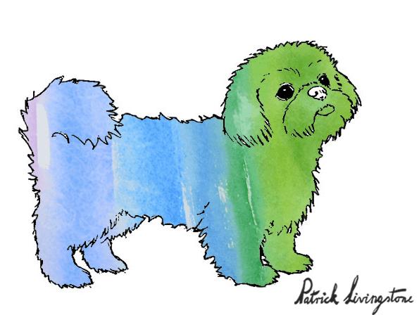 Shih Tsu dog drawing in color 3