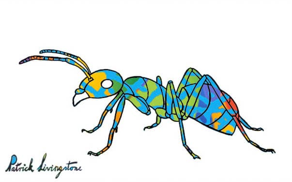 Ant drawing colored blue on red