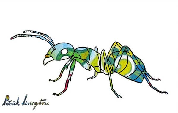 Ant drawing colored green miro 2