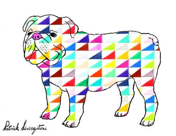 Bulldog drawing colored