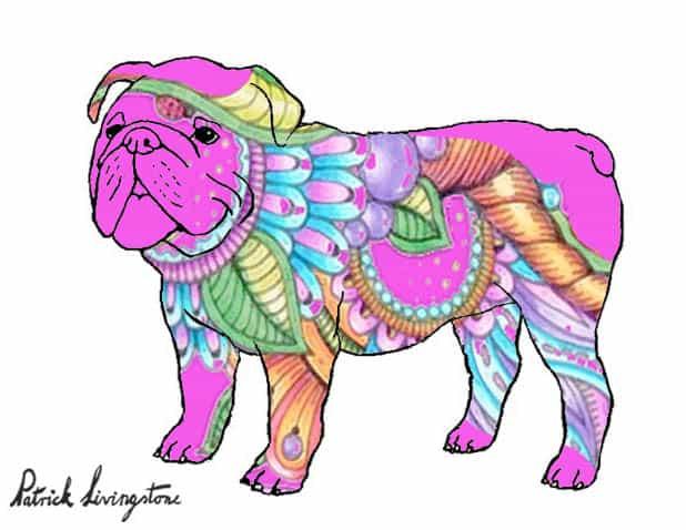 Bulldog drawing colored 1