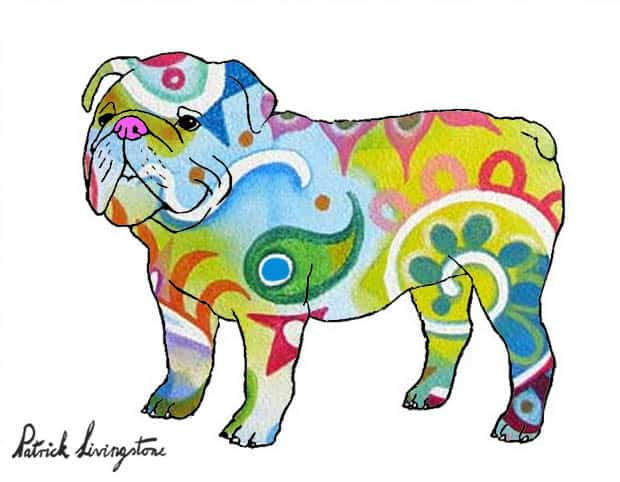 Bulldog drawing colored 11