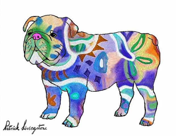 Bulldog drawing colored 12