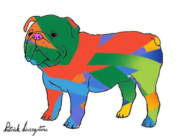 Bulldog drawing colored 13