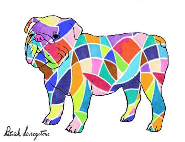 Bulldog drawing colored 14