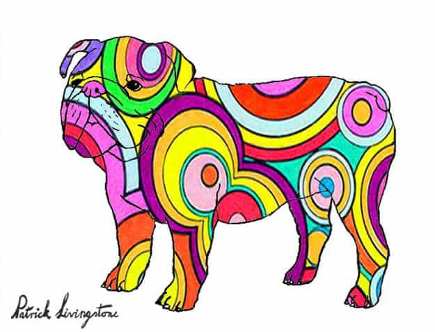 Bulldog drawing colored 15