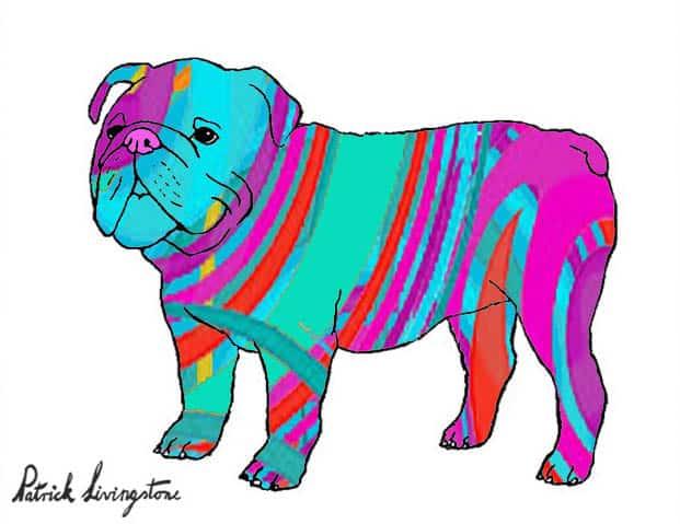 Bulldog drawing colored 19