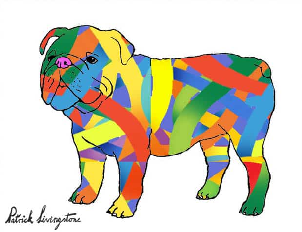 Bulldog drawing colored 7