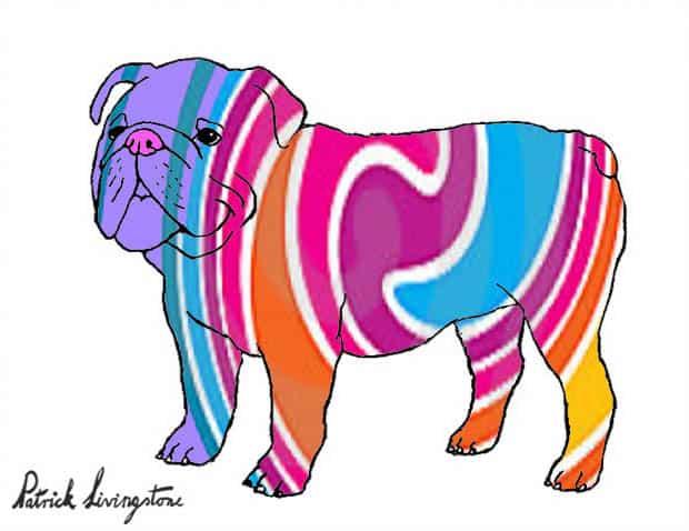 Bulldog drawing colored 8