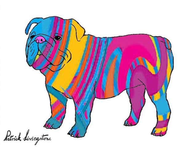 Bulldog drawing colored orange