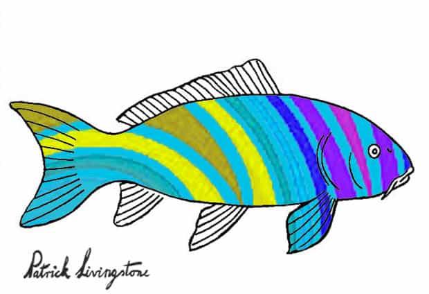 Carp drawing colored bluish