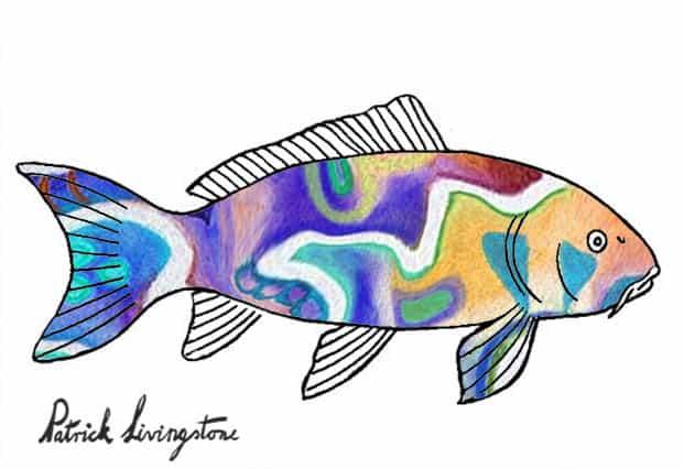 Carp drawing colored miro